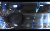 ¿Cómo se mueve un líquido cuando se calienta?